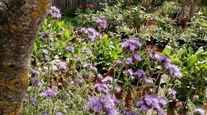 Jardin fleurs @ Florian HermouetIMG_20200423_115245