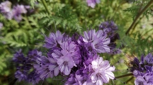 Jardin fleurs @ Florian HermouetIMG_20200423_115308