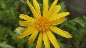Jardin fleurs @ Florian HermouetIMG_20200423_115445