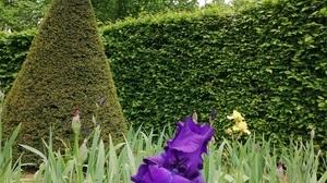 Jardin fleurs @ Florian HermouetIMG_20200424_144121