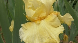 Jardin fleurs @ Florian HermouetIMG_20200424_144216