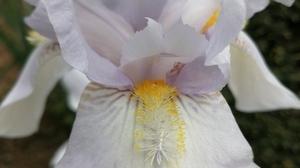 Jardin fleurs @ Florian HermouetIMG_20200424_144316