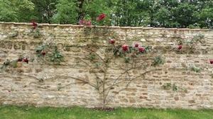 Jardins Christie roses @ Florian Hermouet_20200420_113539