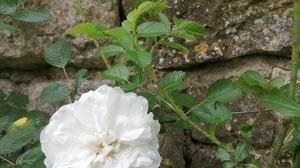 Jardins Christie roses @ Florian Hermouet_20200421_105539