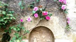 Jardins Christie roses @ Florian Hermouet_20200421_155859