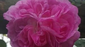 Jardins Christie roses @ Florian Hermouet_20200421_160100
