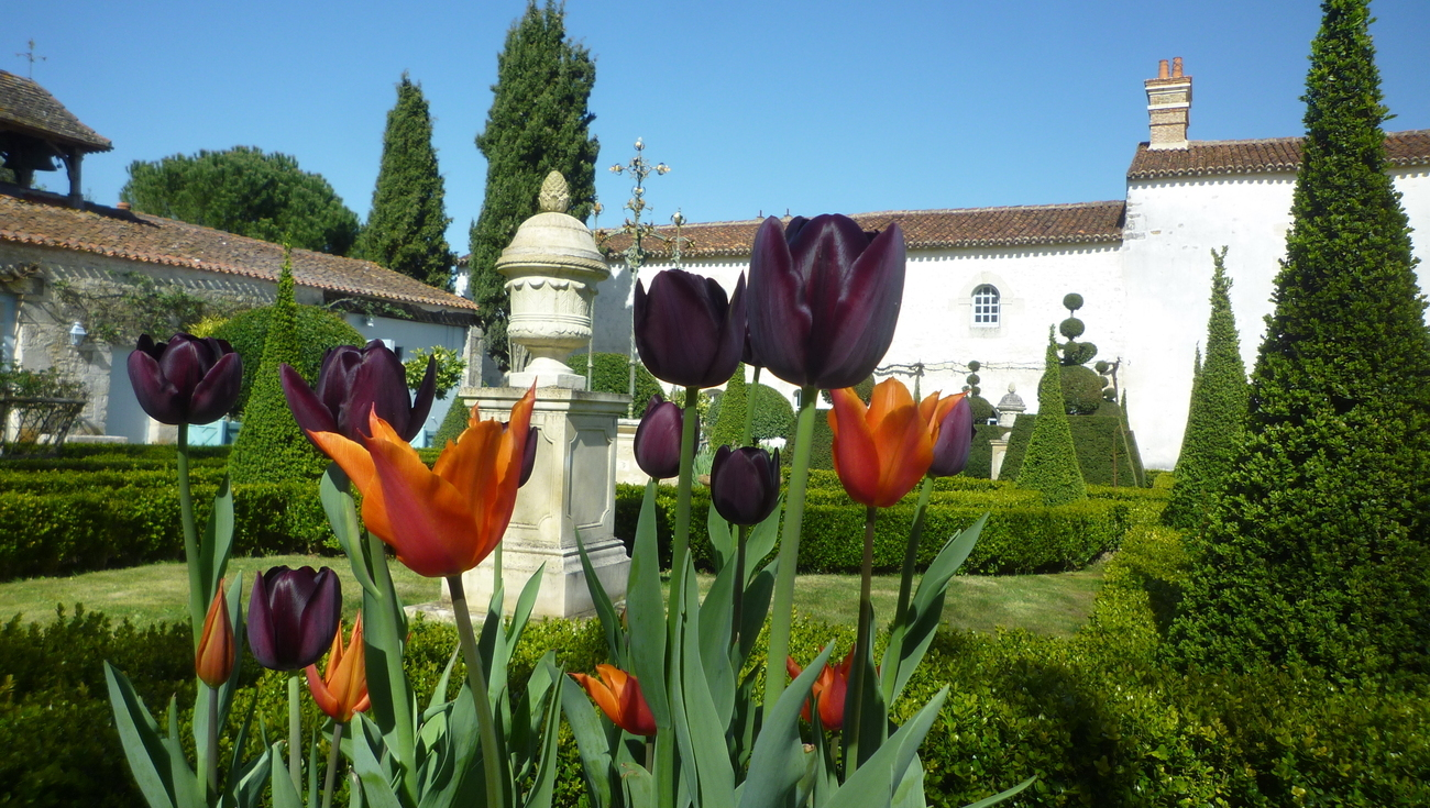 Tulipes Jardins Thire Avril 2020