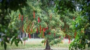 festival-jardin-ephemere-6-d-fugere