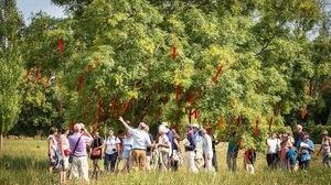 Festival-william-christie-jardin-ephemere-4-d-fugere