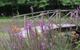 Jardin William Christie P Aubourg