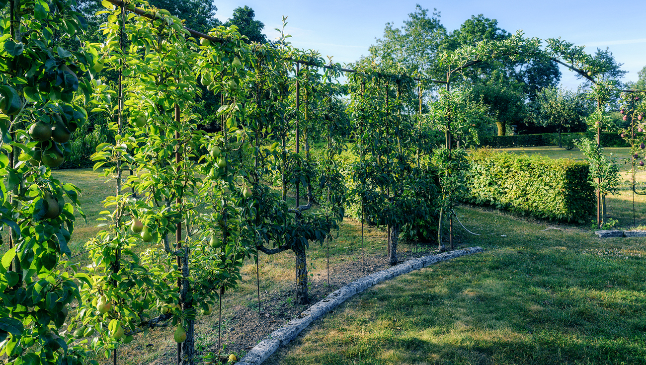 2020 Jardins William Christie DSC5022 Lionel Hug