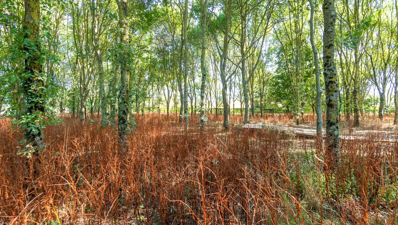 Jardins-William-Christie-2019-8544-Julien-Gazeau