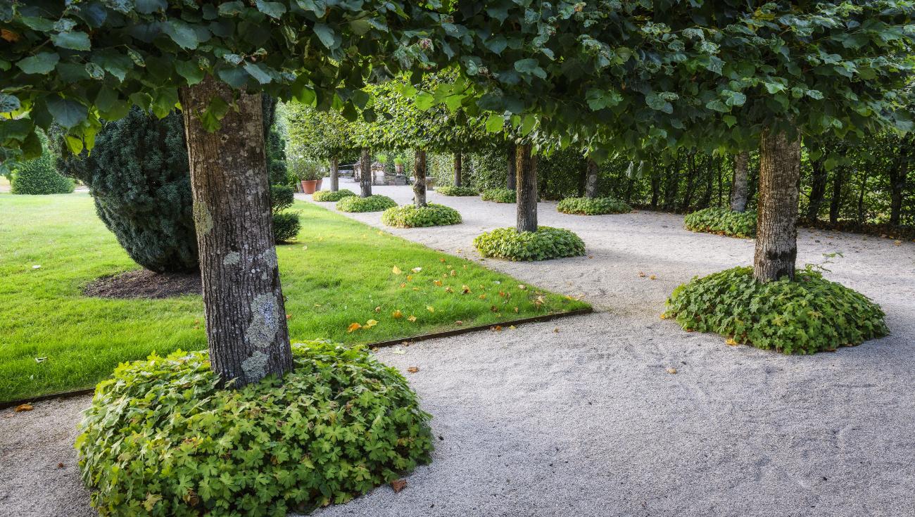 Jardins William Christie 2020 DSC4804 DxO Lionel Hug